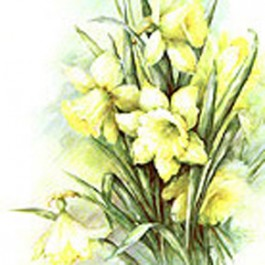 Jonquils by Sonie Ames