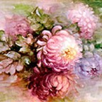 Colored Mums by Sonie Ames