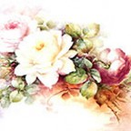 White and Pink Roses by Sonie Ames