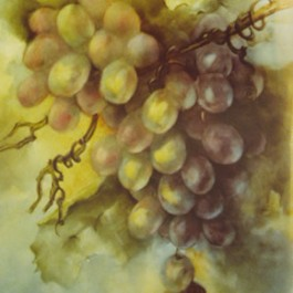 Shaft of Light (Grapes) by Camille Muller