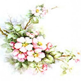 Apple Blossoms by Sonie Ames