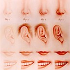 Ear, Mouth, Teeth and Nose by San Do