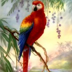 Macaw #3 by San Do