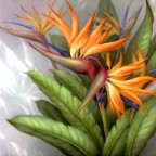 Bird of Paradise by San Do